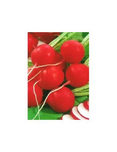 Semillas de rábano redondo rojo