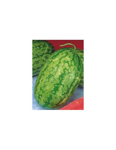 Klondike watermelon