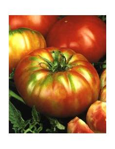 Semillas Tomate Super Marmande RAF