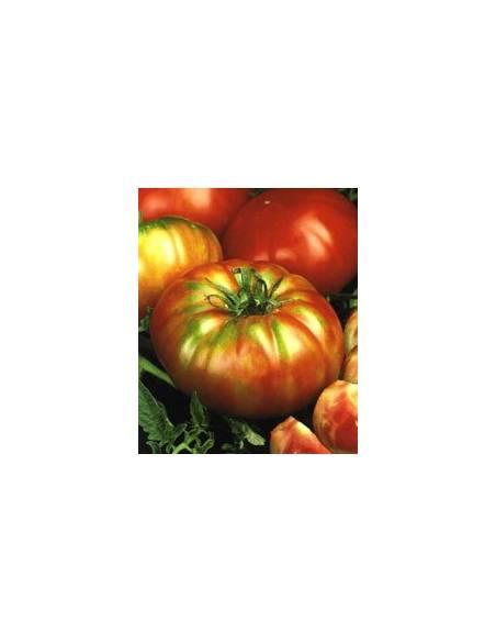 Tomato Super Marmande RAF