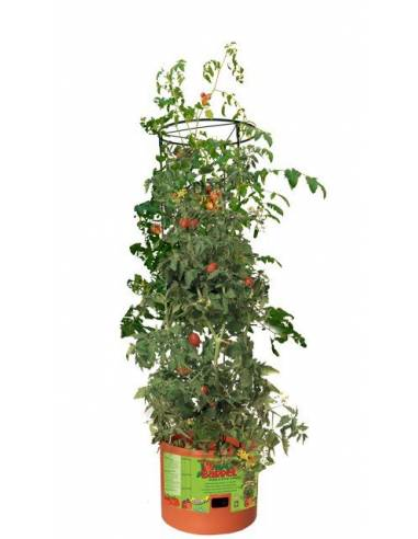 Maceta para cultivar tomates