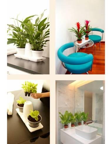 Mini Garden Basic
