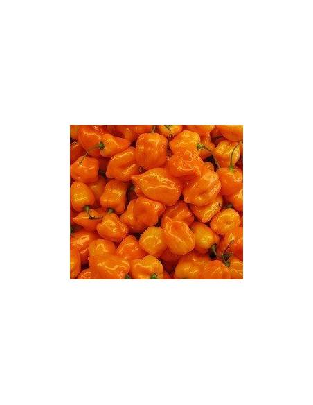 Seeds orange habanero pepper (very hot)