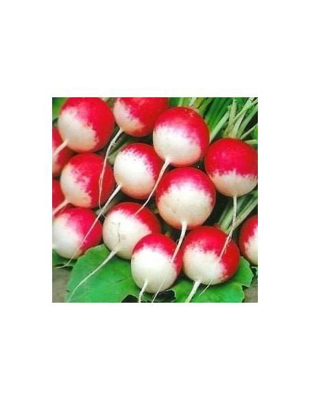 Radish seeds round white tip