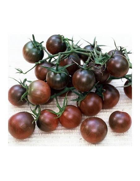 Black cherry tomato seeds