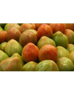 Semillas Tomate valenciano