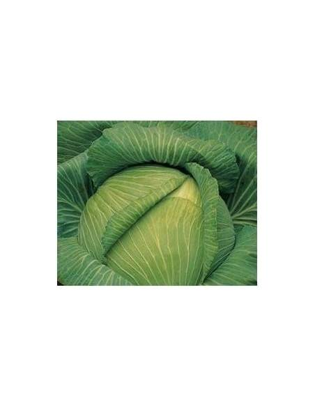 Col cabbage seeds