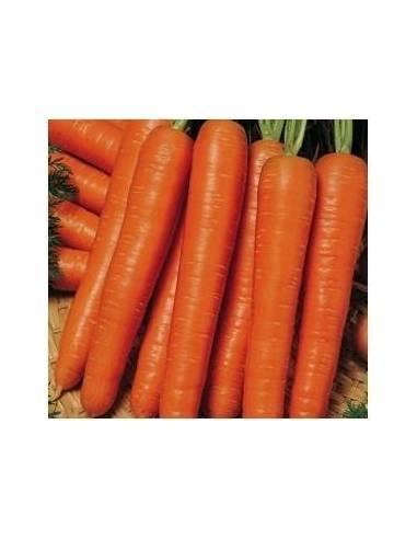 ECO Semillas zanahoria nantesa 5