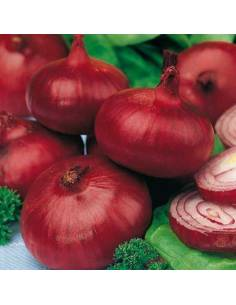 ECO Seeds of Zalla red onion