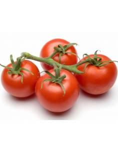 ECO pomodoro tomato seeds