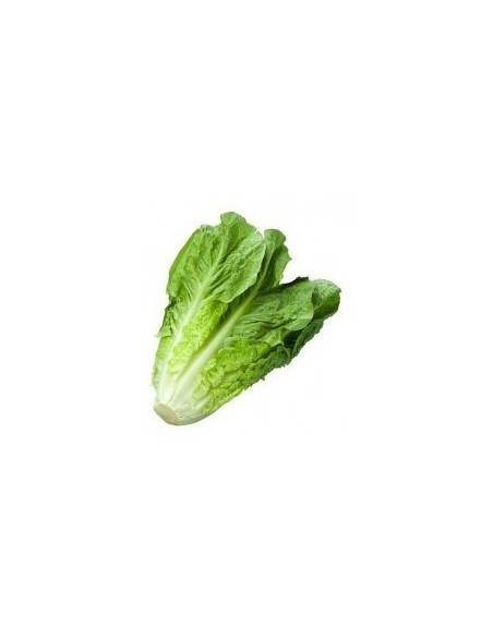 ECO long blond romaine lettuce seeds