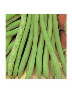 ECO freshwater bean seeds