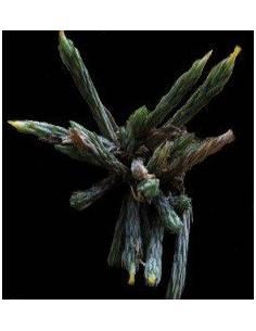 Tillandsia bryoides