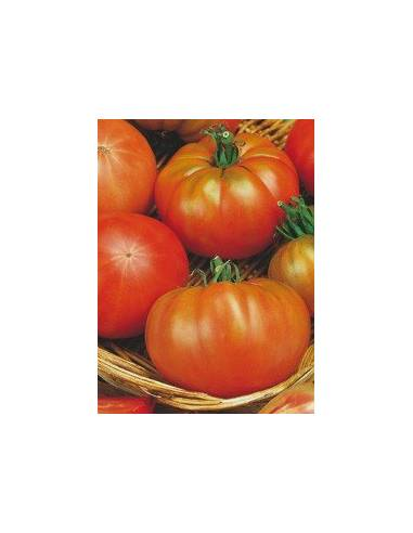 Semillas de tomate muchamiel
