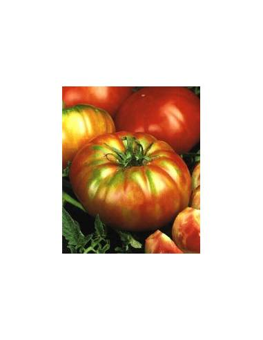 Tomate Super Marmande Raf