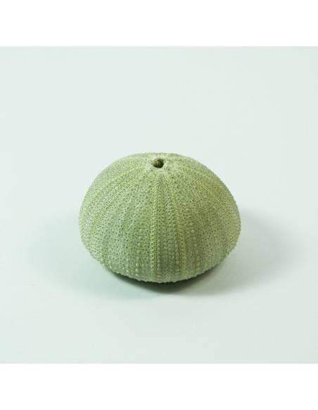 Medium green Hedgehog