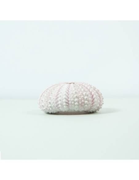 Sea Urchin pink small
