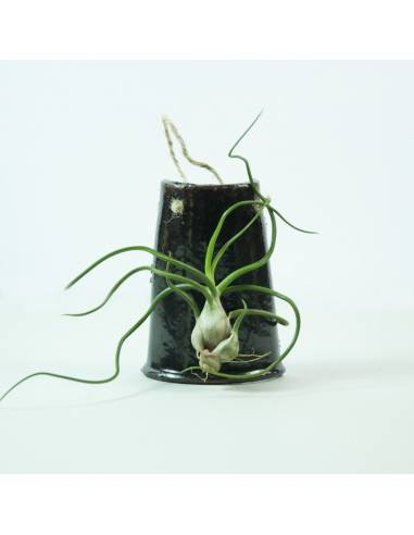 Tile hanging Brown Bulbosa
