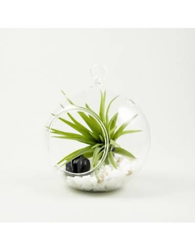 Terrario bubble pequeño 10 cm.