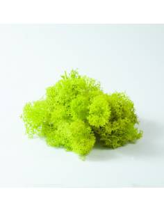 Lichen green lemon