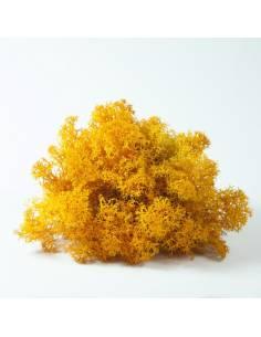 Liquen naranja