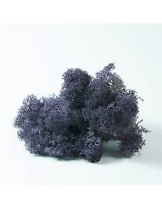 Purple Lichen