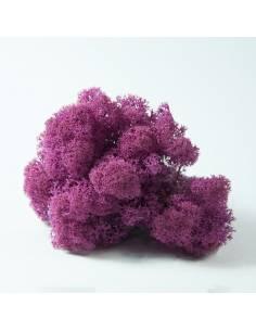 Pink Lichen