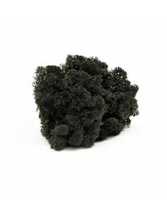 Lichen preserved black