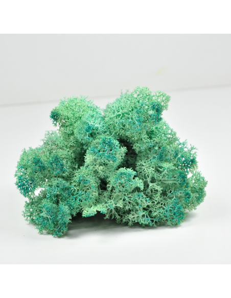 Pacific Green Lichen