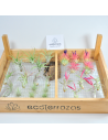 Pack 25 Tillandsias