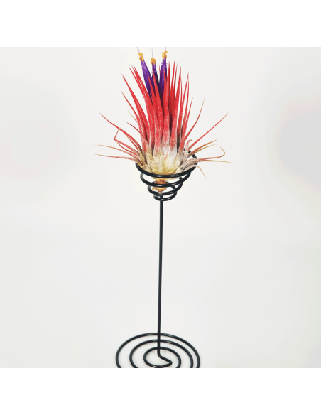 Metal stand for Tillandsias 2