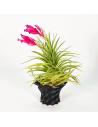 Soporte para Tillandsias 3D Ecoterrazas