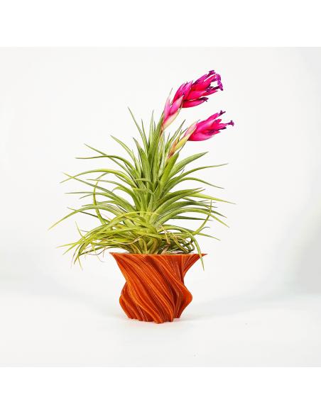 Soporte maceta para Tillandsias 3D diseño corteza Ecoterrazas