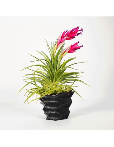 Soporte maceta para Tillandsias 3D efecto cubismo Ecoterrazas