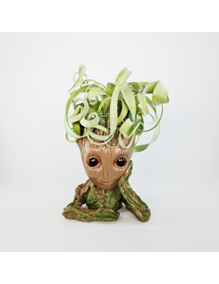 Soporte muñeco raíz pensador + Tillandsia