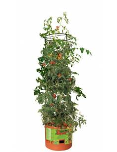 Planter for growing tomatoes