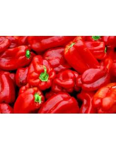 Bell Pepper large seeds