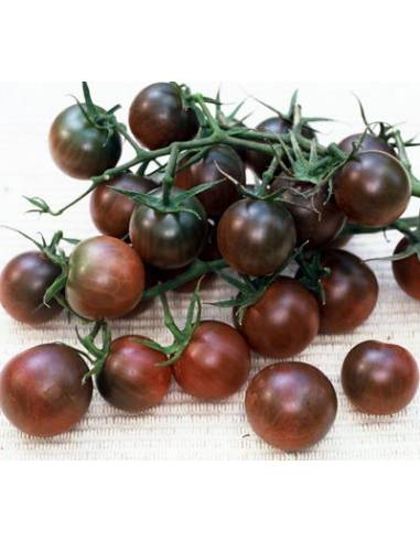 Semillas Tomate black cherry