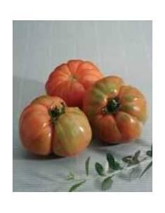 ECO semillas tomate 3 cantos
