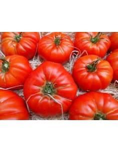 ECO Semillas tomate marmande