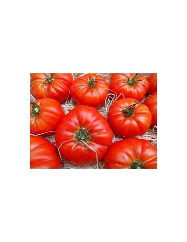 ECO Semillas tomate marmande