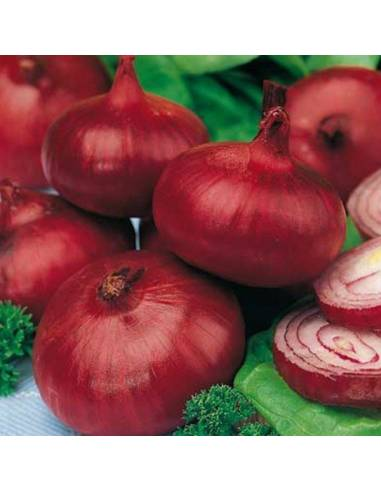 ECO Semillas cebolla roja de zalla