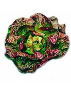 Lettuce seeds ECO 4 Seasons