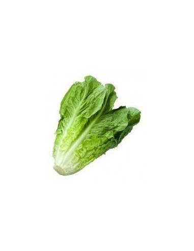 ECO long blond romaine lettuce seeds