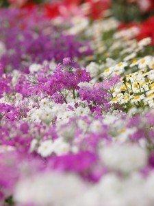 Plantas Primavera