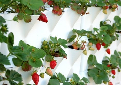 jardín vertical minigarden