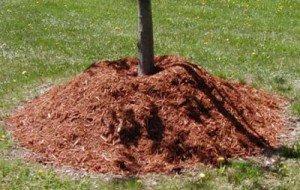 Acolchado-técnica-de-jardinería