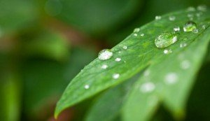Plantas-contra-la-humedad