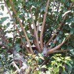 demasiadas ramas entorpeciendose