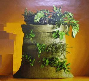 ejemplo de cultivo con sacos